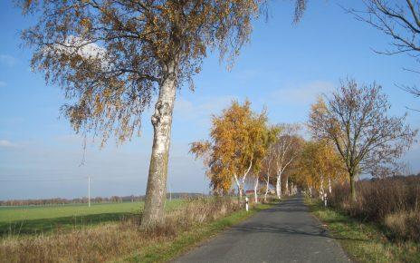 Die Baumalle von Kieve nach Melz